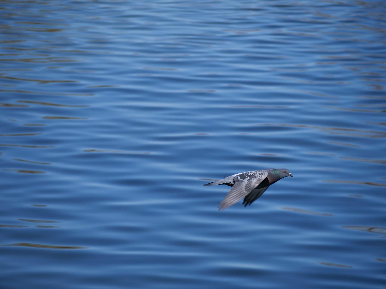 【G9pro】飛ぶ鳥を撮ってみました【動物認識AF】